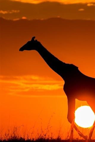 iPhone Wallpaper Sunset, giraffe, sunshine, dusk, sketch, Africa