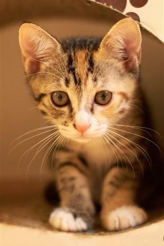 iPhone Wallpaper Cute kitten, hidden