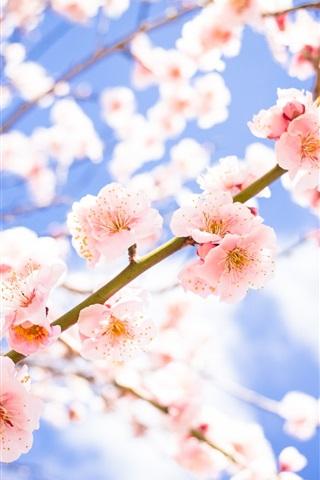Hintergrundbilder Mit Blumen
