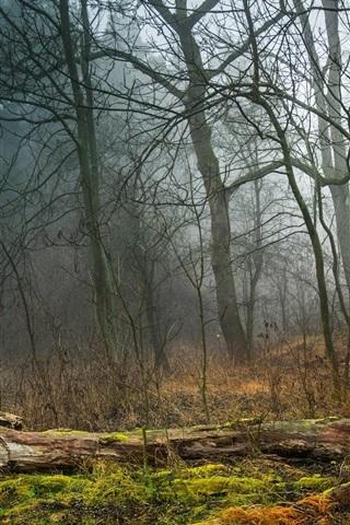 iPhone Wallpaper Forest, trees, fog, grass, moss
