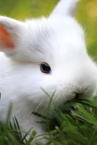 iPhone Wallpaper Green grass, cute white rabbit