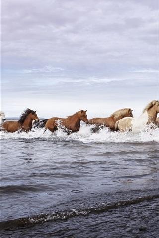 iPhone Wallpaper Horses, river, water