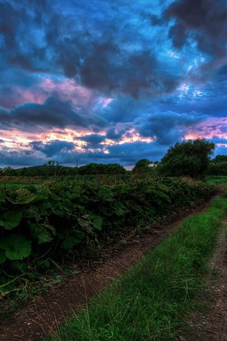 iPhone Wallpaper Nature landscape at evening, grass, road, field, dark blue clouds