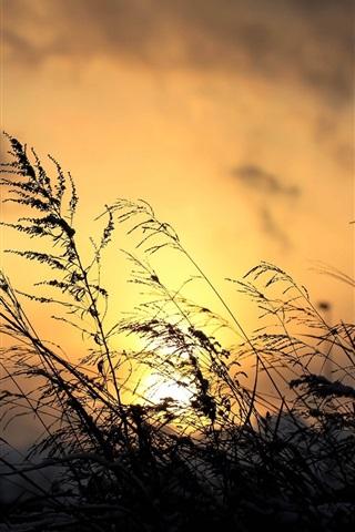 iPhone Wallpaper Sunset, grass, plant