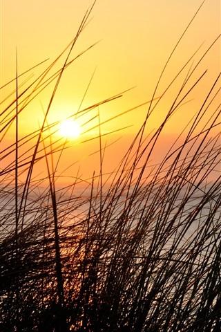 iPhone Wallpaper Sunset, grass, river