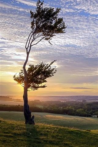 iPhone Wallpaper Sunset, tree, grass, sky, clouds