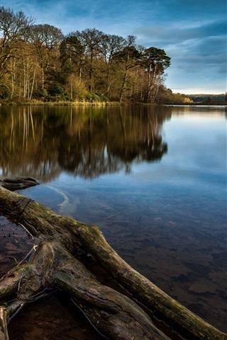 iPhone Wallpaper Tree stump, lake, trees
