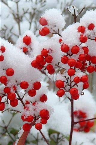 iPhone Wallpaper Twigs, snow, winter, red berries