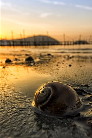 iPhone Wallpaper Dawn, morning, sunrise, snail