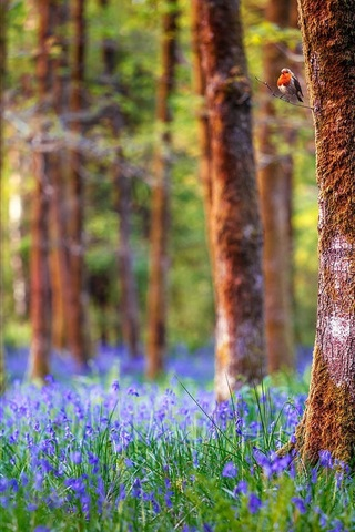 iPhone Wallpaper England, forest, trees, blue flowers, nature landscape