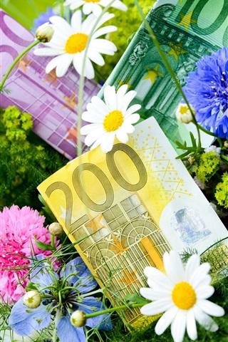 iPhone Wallpaper Flowers, cornflowers, chamomile, money, Euro