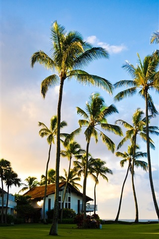 iPhone Wallpaper Hawaii, Kauai, beautiful scenery, palm tree, summer, house