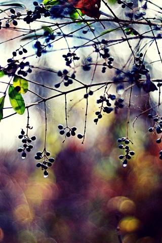 iPhone Wallpaper Plants, twigs, berries, leaves, drops, bokeh, colors