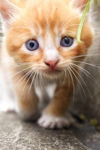 iPhone Wallpaper Cute kitten, look, furry