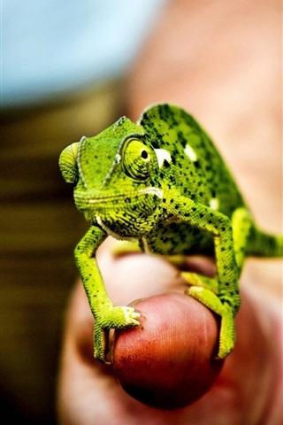 iPhone Wallpaper Little green chameleon, hand, fingers