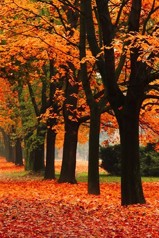 iPhone Wallpaper Park, alley, trees, autumn, red leaves