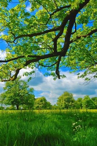 iPhone Wallpaper Summer, meadow, trees, grass, green