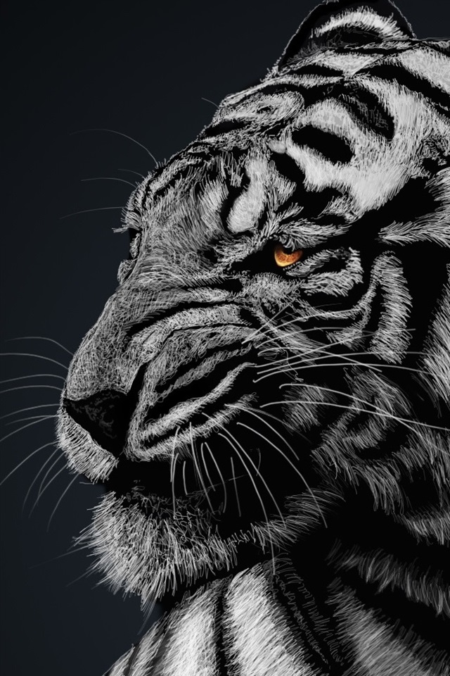 White Tiger Black Background 640x960 Iphone 44s Wallpaper