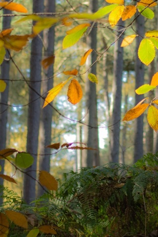 iPhone Wallpaper Autumn, forest, trees, leaves