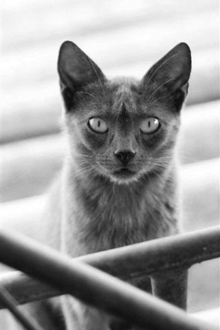 iPhone Wallpaper Black cat, railings, stairs