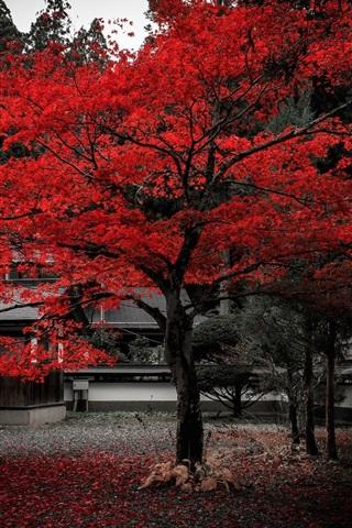 壁纸 日本,房子,树,红叶,秋 1920x1200 HD 高清壁纸, 图片, 照片