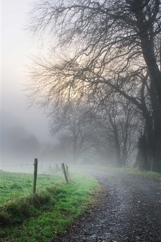 iPhone Wallpaper Morning, road, fog, trees