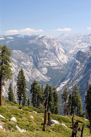 iPhone Wallpaper Mountains, trees, valley, Yosemite National Park, California, USA