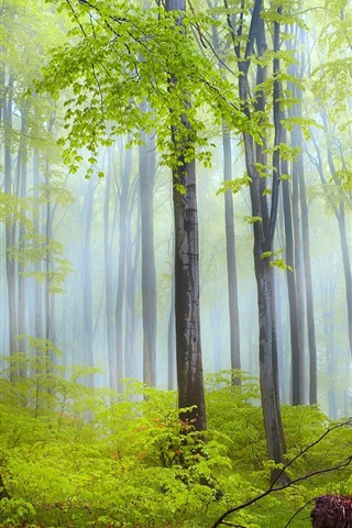 iPhone Wallpaper Nature scenery, forest, trees, morning, fog, after rain