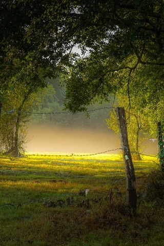iPhone Wallpaper Park, fog, morning, trees, grass, summer