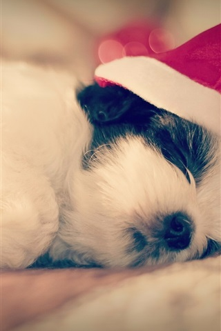 iPhone Wallpaper Shih Tzu, dog sleep, Christmas