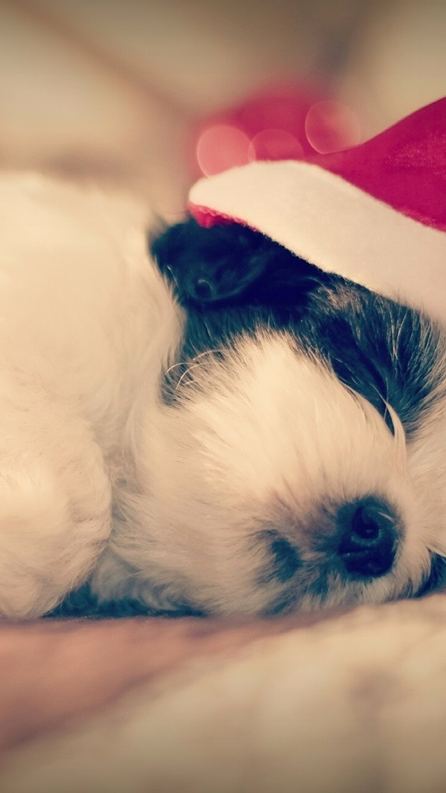 Shih Tzu Dog Sleep Christmas 640x1136 Iphone 5 5s 5c Se Wallpaper Background Picture Image