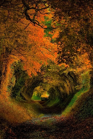 iPhone Wallpaper Trees, hole, nature, forest, road, autumn, colors, leaves