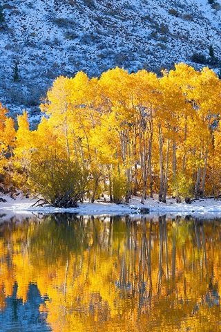iPhone Wallpaper Trees, yellow leaves, lake, snow, winter, water reflection