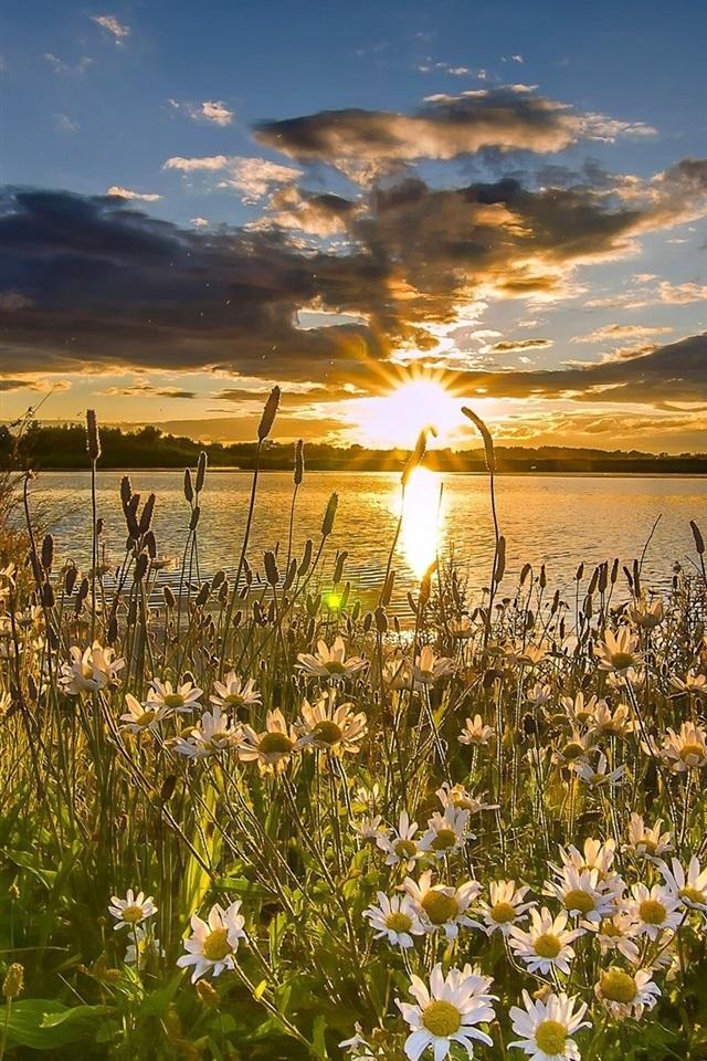 картинки с добрым вечером с видом на солнечное поле ромашек состоялась первая