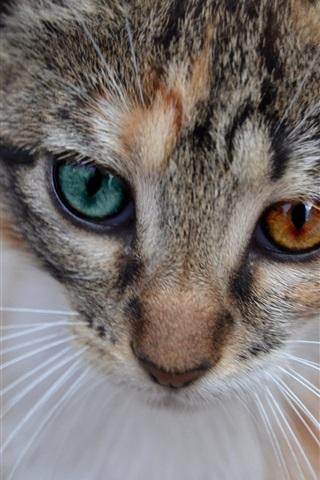 iPhone Wallpaper Cat face, whiskers, bokeh