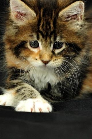 iPhone Wallpaper Cute kitten, black background