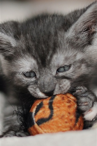 iPhone Wallpaper Cute kitten play toy