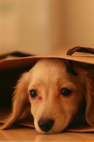iPhone Wallpaper Cute puppy, lying, paper bag