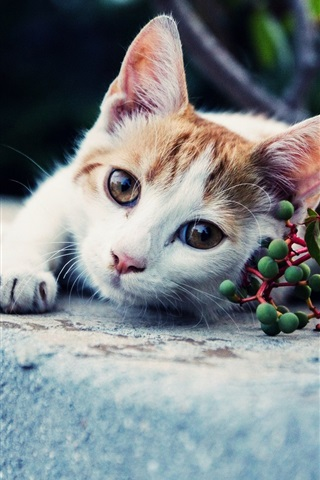 iPhone Wallpaper White brown cat, look, green berries