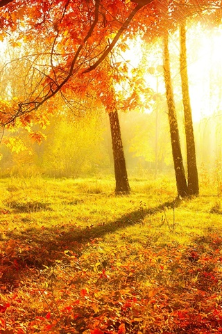 iPhone Wallpaper Beautiful autumn, forest, trees, red leaves, grass, sun rays