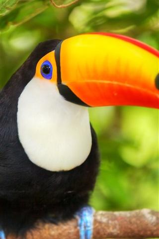 iPhone Wallpaper Bird close-up, toucan, branches