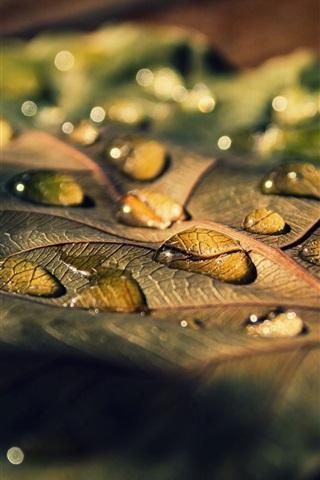 iPhone Wallpaper Leaf macro, water drops, sunlight