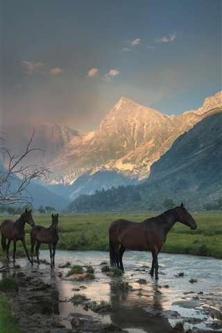 iPhone Wallpaper Mountains, canyon, mist, stream, grass, horse