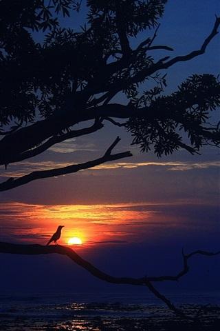 iPhone Wallpaper Sunset, sea, tree, bird, dusk, evening