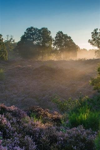 iPhone Wallpaper Veluwezoom National Park, Netherlands, heather, trees, sun rays, dawn