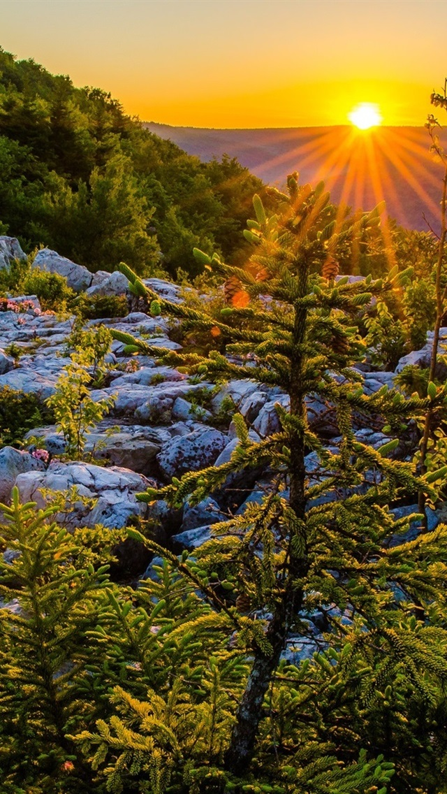 Allegheny Mountains West Virginia Usa Sunset Plateau