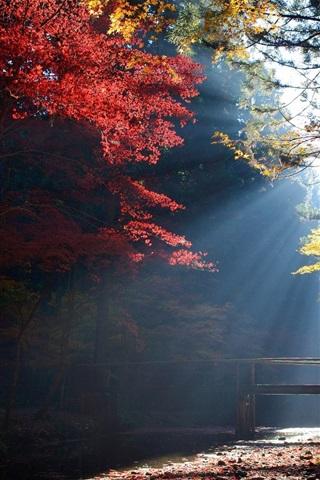 iPhone Wallpaper Forest, trees, bridge, sun rays, autumn