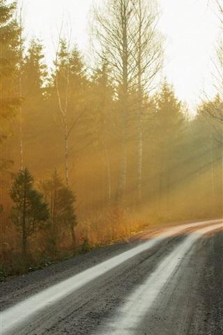 iPhone Wallpaper Morning, forest, road, fog, sunrise