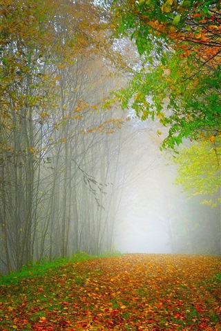 iPhone Wallpaper Morning, nature scenery, forest, trees, colorful leaves, road