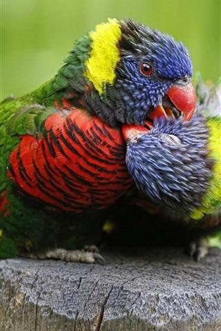iPhone Wallpaper Multicolor lorikeet, parrot, birds close-up